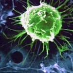 FDA Clears Way For Human Embryonic Stem Cell Therapy