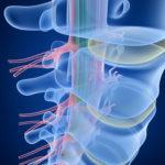 Human Spine x-ray
