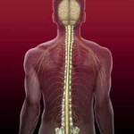 Olfactory Mucosa Cells in Spinal Cord Injury