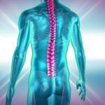 Optogenetics muscle control