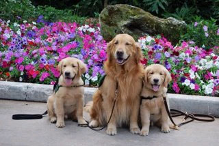 Three New Horizons Service Dogs.