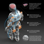See how scientists are using electrodes to develop a mechanical skeleton.