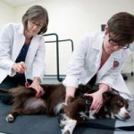 help dogs with spinal cord injuries