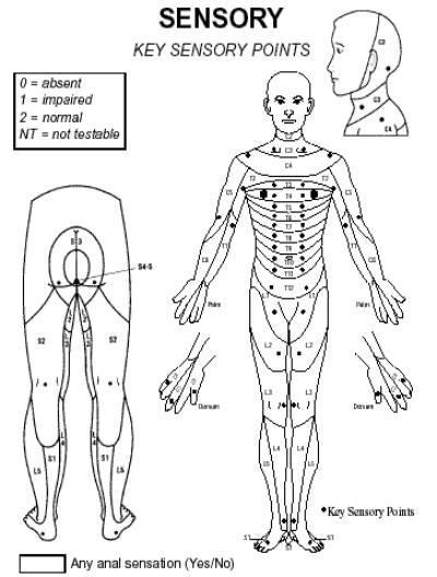 Asia Chart Spinal Cord http://www.spinalcordinjuryzone.com/info/7333/spinal-cord-injury-levels-classification