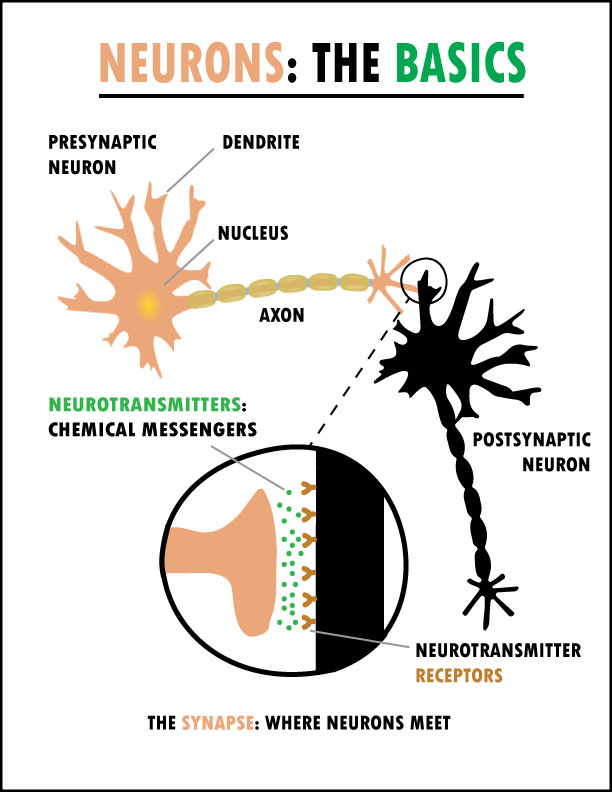 neurons - the basics